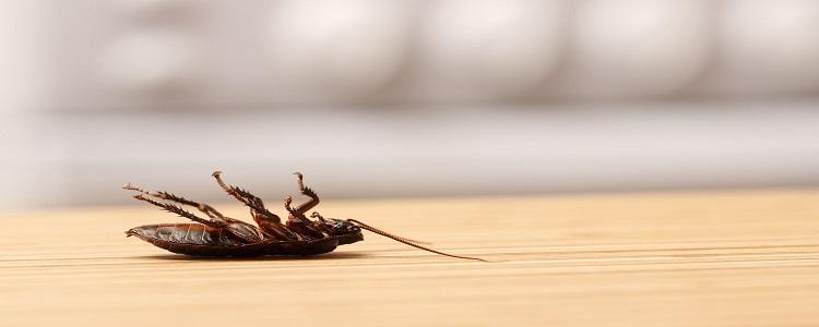 Pest Control Pimpama